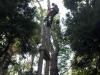 MR GREEN - Potatura Pinus Pinea
