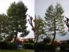 Prima e dopo Halepensis Sirolo