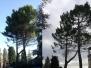 Potatura Pinus Halepensis Secolare - Macerata