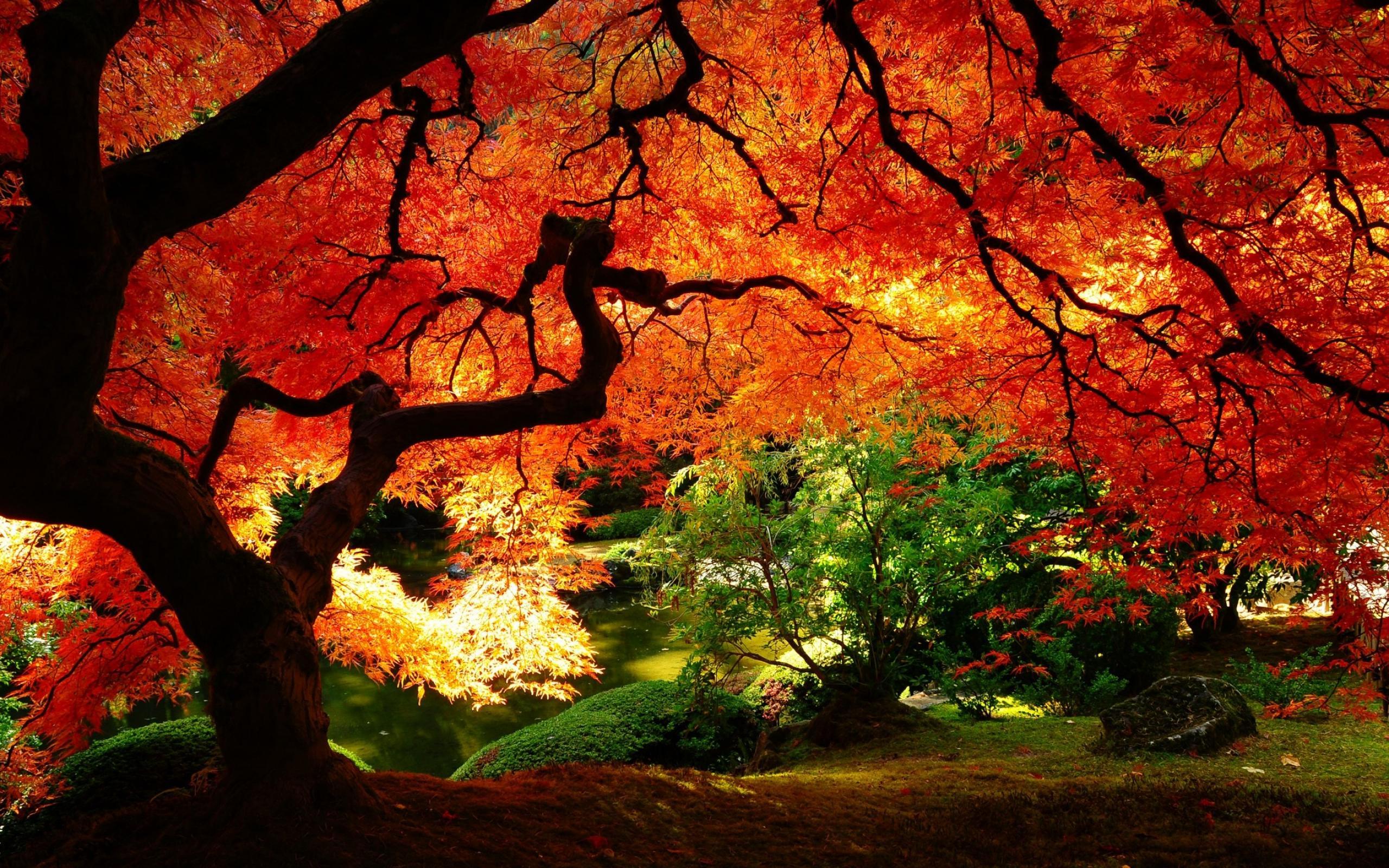 Nature naturen alberi autunno natura foto sfondi per for Immagini sfondo natura