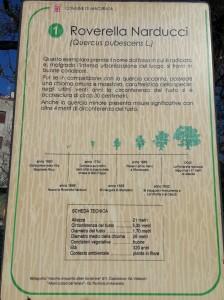 MR GREEN - Roverella Monumentale Narducci